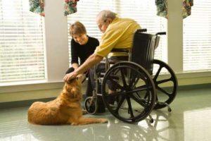 Animals in nursing homes