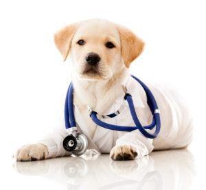 pet providing therapy